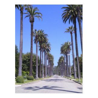 Palmen auf einer Straße in Los Angeles Postkarte