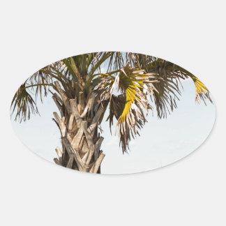 Palmen auf Myrtle Beachostküsten-Promenade Ovaler Aufkleber