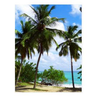 Palmen auf tropischer Meerblick-Postkarte Postkarten