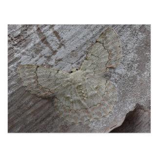 Palmen-Motte, Papua-Neu-Guinea Postkarte