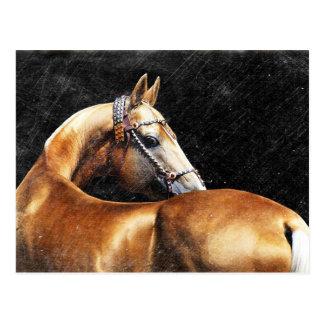 Palomino Akhal-teke Stallion Postkarte