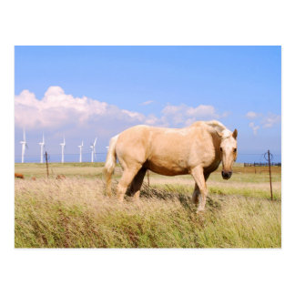 Palomino-Pferd mit Windmühlen-Postkarte Postkarte