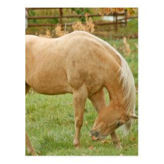 Palomino-Pferd Postkarte