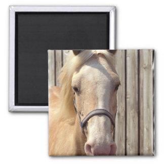 Palomino-Pony-Quadrat-Magnet Quadratischer Magnet