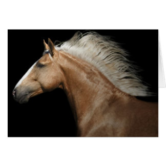PalominoStallion Karte