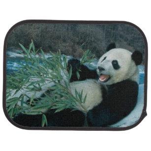 Panda, der Bambus durch Flussufer, Wolong, 2 isst Automatte