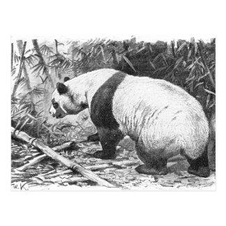 Panda Schwarzweiss Postkarte