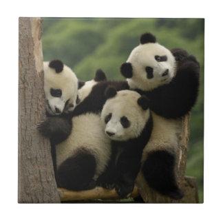 Pandababys Ailuropoda melanoleuca) 4 Keramikfliese