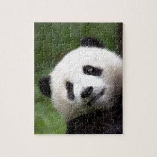 PandaBärenjunges