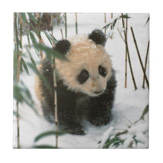 Pandajunges auf Schnee, Wolong, Sichuan, China 2 Keramikfliese