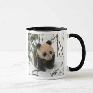 Pandajunges auf Schnee, Wolong, Sichuan, China 2 Tasse