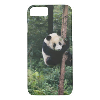 Pandajunges, das den Baum, Wolong klettert, iPhone 8/7 Hülle