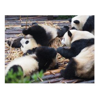 Pandas, Chengdu, China-Postkarte Postkarte