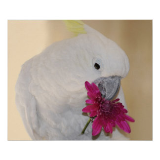 Papagei er Lieben ich oder nicht Poster