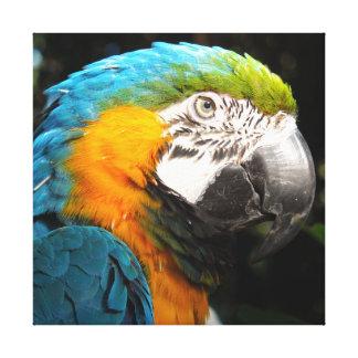 Papagei Leinwanddruck