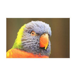 Papagei - Lori Leinwanddruck