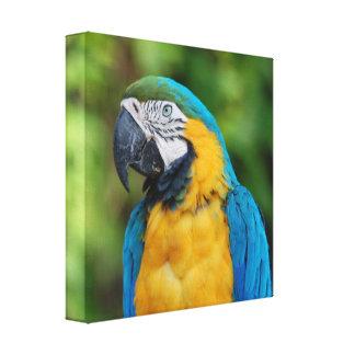 Papageien-Leinwand Leinwanddruck