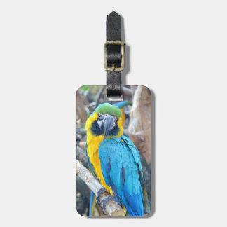 Papageien-Porträt Gepäckanhänger