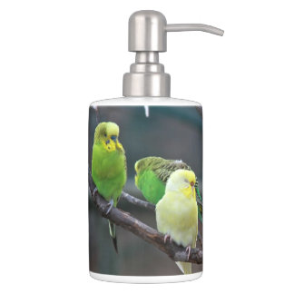 Papageien-Vögel des Parakeets-Foto-| Budgies Zahnbürstenhalter