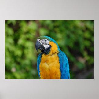 Papageien-Wert-Plakat-Papier (Matt) Poster