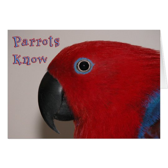 Papageien wissen grußkarte
