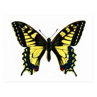 Papilio machaon postkarte