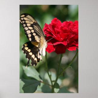 Papillon avec la copie rose de toile de Don Juan Poster