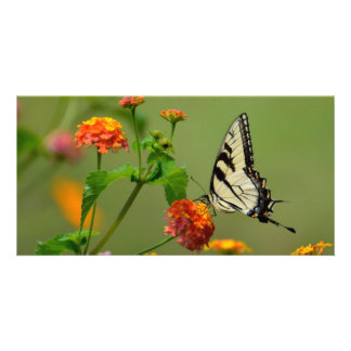 Papillon de machaon de tigre modèle pour photocarte