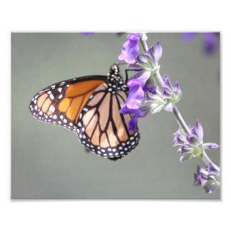 Papillon de monarque avec des fleurs photos sur toile