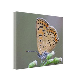 Papillon d'impression de toile - maman toiles tendues sur châssis