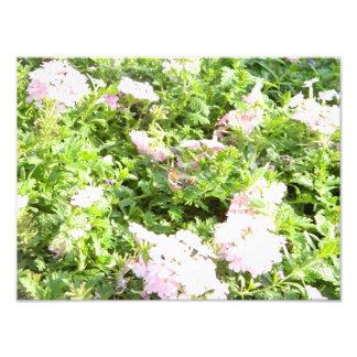 Papillon et fleurs tirages photo