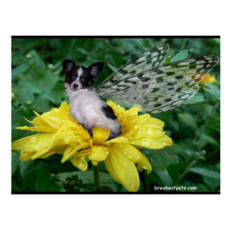 Papillon Fee-Hund Postkarte