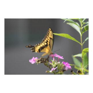 Papillon fleurs de ` N' Photo D'art