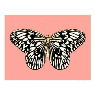 Papillon noir et blanc, arrière - plan rose de carte postale