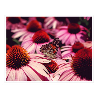 Papillon Postkarte
