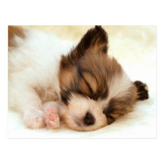 Papillon puppy postkarte