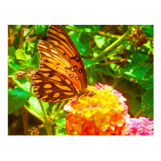 Papillon (Schmetterling) Postkarte