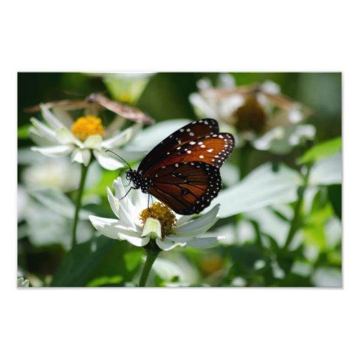 Papillon sur la fleur blanche impressions photographiques