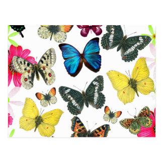 Papillons colorés de jaune vintage de rouge bleu carte postale
