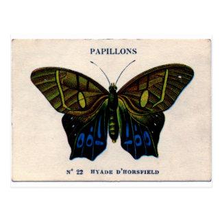 Papillons Vintager Schmetterlingsentwurf Postkarte