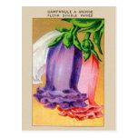 Paquet français vintage de graine de fleur de carte postale