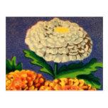 Paquet français vintage de graine de fleur de chry carte postale