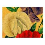 Paquet français vintage de graine de fleur de pois cartes postales