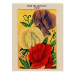 Paquet français vintage de graine de fleur de pois carte postale