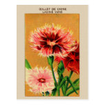 Paquet vintage de graine de fleur d'oeillet de la carte postale
