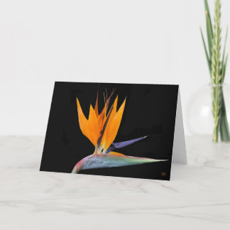Bird Of Paradise Greeting Cards
