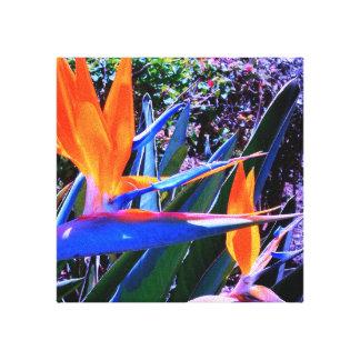 Paradiesvogel Hawaii Leinwanddruck