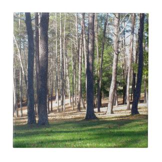 Park-Bäume Kleine Quadratische Fliese