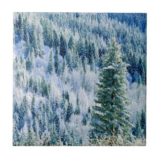 Park USA, Washington, Staat Mt. Spokane, Aspen Fliese