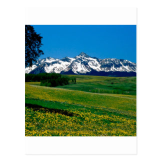 Park-volle Blüte San Juan Ains Colorado Postkarte